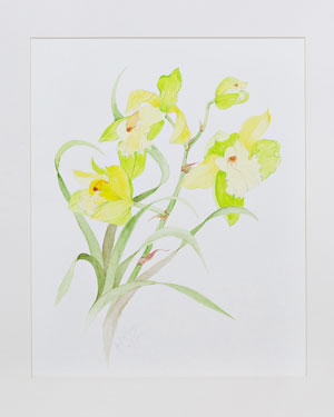 Yellow Orchid -  Medium: watercolor Size: 22 x 26 Price: $525.00